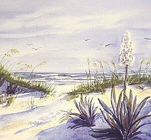 Beach Yuccas